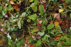 Folhas coloridos Foto de Stock