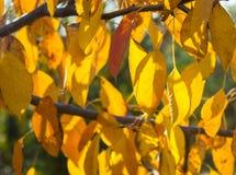Folhas coloridos do outono no ramo fotografia de stock