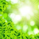 Folhas com fundo de Bokeh Fotografia de Stock