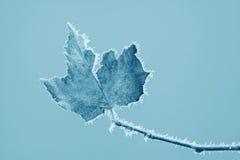 Folhas com geada no inverno Imagem de Stock