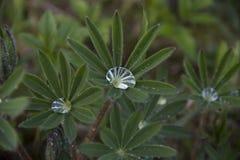 Folhas com gotas da chuva fotografia de stock royalty free