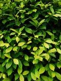 Folhas com máscaras diferentes do verde Fotos de Stock