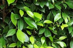 Folhas com a plantação no fundo imagens de stock royalty free