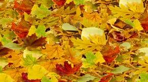 Folhas como um fundo Fotos de Stock