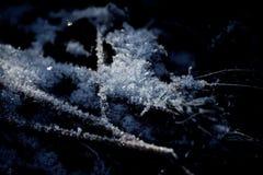 Folhas congeladas Fotos de Stock