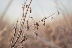 Folhas congeladas e ramos gelados, fundo surpreendente do inverno Imagem de Stock