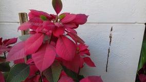 Folhas cor-de-rosa e verdes artísticas Foto de Stock