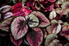 folhas Coração-dadas forma no jardim imagens de stock