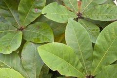 Folhas crescentes imagens de stock