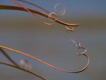 Folhas curly abstratas da planta Fotos de Stock