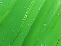 Folhas da água das gotas Foto de Stock Royalty Free