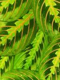 Folhas da água das gotas Imagem de Stock Royalty Free