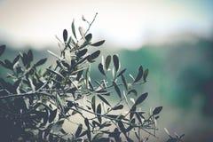 Folhas da árvore Fotos de Stock Royalty Free