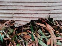 Folhas da árvore Fotos de Stock