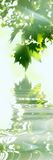 Folhas da árvore de bordo Fotos de Stock Royalty Free