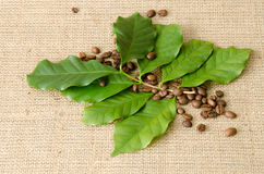 Folhas da árvore de café e feijões de café Foto de Stock