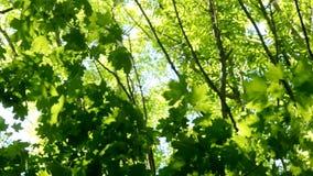 Folhas da árvore em uma floresta verde da mola vídeos de arquivo