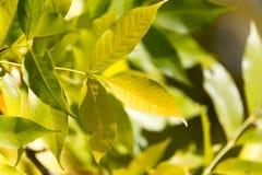 Folhas da árvore na natureza Fotos de Stock
