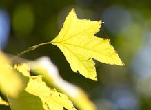 Folhas da árvore na natureza Imagem de Stock