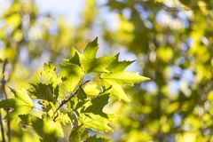 Folhas da árvore na natureza Foto de Stock Royalty Free