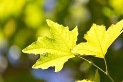 Folhas da árvore na natureza Imagens de Stock Royalty Free