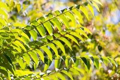 Folhas da árvore no outono Imagens de Stock