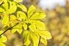 Folhas da árvore no outono Fotografia de Stock Royalty Free