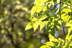 Folhas da árvore no outono Foto de Stock Royalty Free
