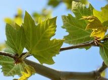 Folhas da árvore plana Fotos de Stock Royalty Free