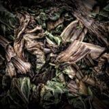 Folhas da acelga em um montão do adubo Imagens de Stock Royalty Free