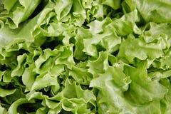 Folhas da alface Fotografia de Stock