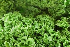 Folhas da alface, fim acima imagens de stock