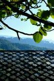 Folhas da amêndoa sobre o telhado fotos de stock royalty free