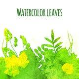 Folhas da aquarela Fotografia de Stock