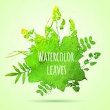 Folhas da aquarela Imagens de Stock