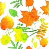 Folhas da aquarela Fotografia de Stock Royalty Free