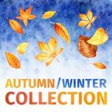 Folhas da aquarela coleção do inverno do outono Fotos de Stock Royalty Free