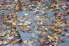 Folhas da ardósia Imagens de Stock