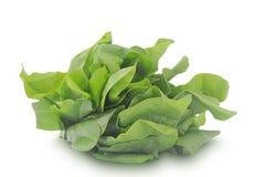 Folhas da azeda verde isoladas no fundo branco Fotos de Stock