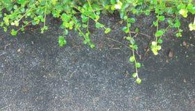 Folhas da beira na terra de pedra Foto de Stock Royalty Free