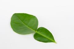 Folhas da bergamota Fotografia de Stock