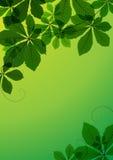 Folhas da castanha Fotografia de Stock