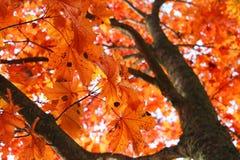 Folhas da cor Fotos de Stock