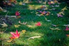 Folhas da cor do outono na grama Foto de Stock Royalty Free
