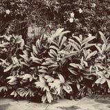 Folhas da cor do Sepia foto de stock