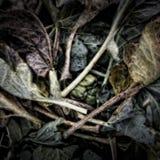 Folhas da couve Rotting Imagem de Stock Royalty Free