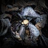 Folhas da couve vermelha em um montão do adubo Imagens de Stock