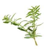 Folhas da erva do Hyssop imagens de stock