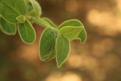 Folhas da fúria Fotografia de Stock