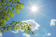 Folhas da faia e luz do sol brilhante na primavera Imagem de Stock